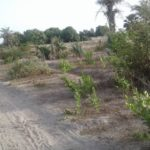 GamRealty | Plot for Sale in Gunjur Madina | The Gambia