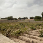 GamRealty | Land For Sale in Brufut | The Gambia