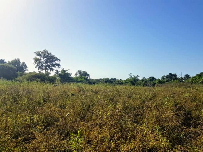 GamRealty Gambia land for sale sanyang