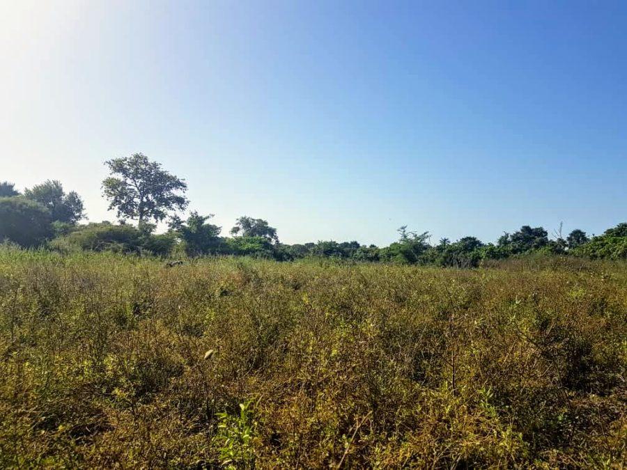 GamRealty Gambia land for sale sanyang